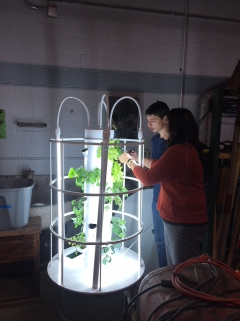 Student helping cut lettuce.