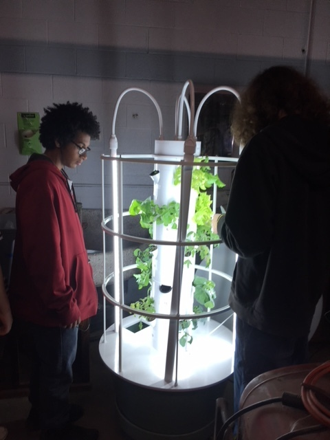 Students checking out the growth of their plants